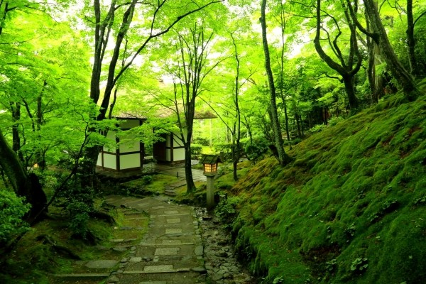 Image result for 常寂光寺